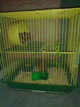 2 female hampsters in Fort Campbell, Kentucky