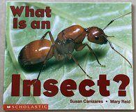 What Is An Insect? Scholastic in Okinawa, Japan
