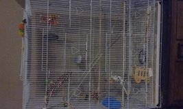 Large cage with parakeet in Cherry Point, North Carolina