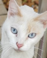 Loving female cat needing home in Fort Campbell, Kentucky