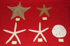 Starfish & Sand Dollar Collection ~ Price individually or all for $25 in Naperville, Illinois