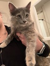 Found kitty around Indian Wells in Alamogordo, New Mexico