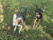 Dog Training Service in Fort Campbell, Kentucky