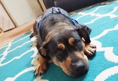Lilith- reservation foster ?? in Alamogordo, New Mexico
