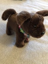 American Girl Puppy in Baytown, Texas