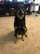 molly needs a good home in Fort Campbell, Kentucky