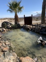 ~PALM TREES FOR SALE!~ in 29 Palms, California