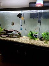 fish tank with fish in Camp Pendleton, California