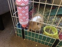 Guinea Pig with Cage & Supplies in Camp Pendleton, California