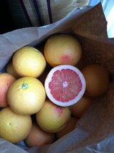 Pink Grapefruit (for sale or trade) in Travis AFB, California
