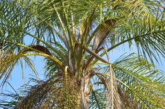 Queen Palm & Tree Expert at your Service in Travis AFB, California