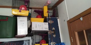 Cages for small pets in Fort Leonard Wood, Missouri
