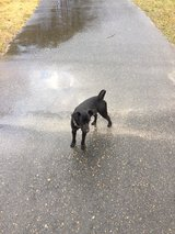 lost dog 1 yr old in Leesville, Louisiana