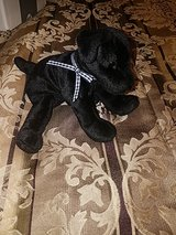 TY Beanie Baby, Luke Is his name in Pearland, Texas