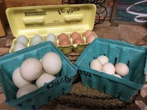 Fertile Chicken Eggs for Hatching in Leesville, Louisiana