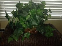 Faux Ivy Basket in Naperville, Illinois