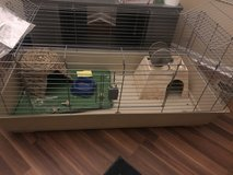 Guinea Pig Cage in Plainfield, Illinois