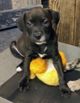 This Little Girl Is Only One Left Seeking Furever Family in Fort Polk, Louisiana