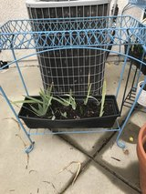 Garden plant stands 2 total in Travis AFB, California
