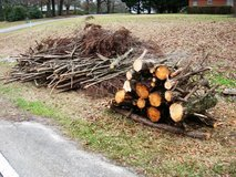 12 Cypress Logs 3 ft. Long FREE - Camping or Firewood in Byron, Georgia
