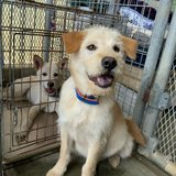 Friendly dogs available for adoption in Okinawa, Japan