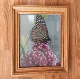 Butterfly Picture in Wood Frame in Naperville, Illinois