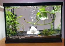 2.5 gallon fish tank in Chicago, Illinois