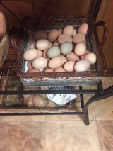 Fresh Farm Eggs in Fort Polk, Louisiana