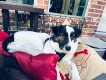 Recently found dog looking for new home in Kingwood, Texas