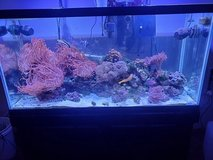 90 gal saltwater aquarium in Plainfield, Illinois