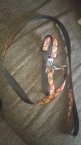 Dog collar and leash in Batavia, Illinois