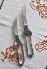 Italian traditional 'trinciapollo' (poultry shears). in Okinawa, Japan