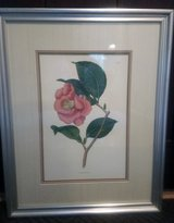 Flower painting Camellia Japonica/Japanese Camellia or glass/wood frame in Oswego, Illinois