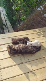 Kittens Ready for a Loving Fun Home in Spring, Texas