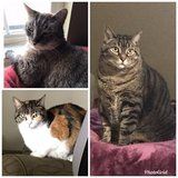 Senior Cats in Fort Leonard Wood, Missouri