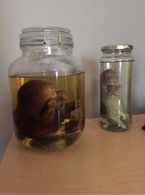 Preserved Animals in Fort Campbell, Kentucky
