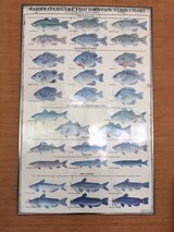 Vintage Warm Water Game Fish Chart in Beaufort, South Carolina