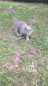 Kittens in Cleveland, Texas