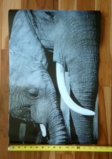 African elephant (adult and baby) black and white print poster 16x24 in Naperville, Illinois