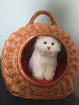 Toy Wicker Pet Bed Carrier in Naperville, Illinois