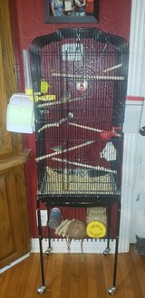 Pair of Zebra Finch's with everything needed in Fort Leonard Wood, Missouri