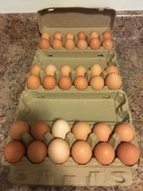 Fresh large chicken eggs in Camp Lejeune, North Carolina