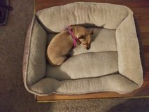 medium size dog bed for sale in Warner Robins, Georgia