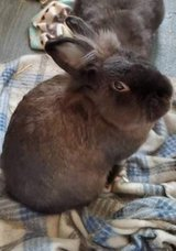 Bonded Rabbits in The Woodlands, Texas
