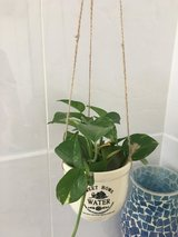 Small hanging plant in Okinawa, Japan