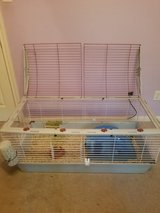 2 female Guinea Pigs including cage set up in Kingwood, Texas