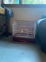 parakeet, cage, food, and toys in Fort Riley, Kansas