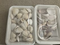 Sea Shells in Naperville, Illinois