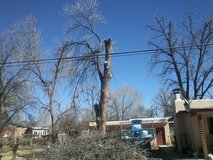TREE REMOVAL OR TREE TRIMMING in Alamogordo, New Mexico