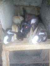 Rabbits in West Orange, New Jersey